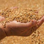 Bloomberg: в мире наблюдается дефицит российской пшеницы ➤ Главное.net