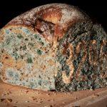 Что будет, если съесть хлеб с плесенью ➤ Главное.net