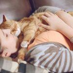 Коронавирус обнаружен в России у кошки ➤ Главное.net