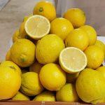 Евреев коронавирус обходит стороной — они пьют напиток из лимонов и соды: рецепт ➤ Главное.net