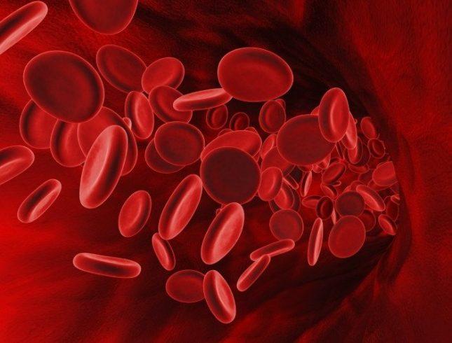 Стало известно как кровь влияет на жизнь и ее продолжительность ➤ Главное.net