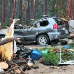 В Красноярском крае женщину насмерть завалило деревом ➤ Главное.net