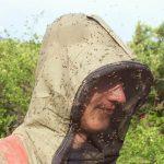 Разлетаются по всей России: Биолог назвала насекомых страшнее комаров ➤ Главное.net