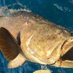 Огромный окунь утащил за борт двух рыбаков (ВИДЕО) ➤ Главное.net