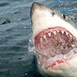 Женщина чуть не попала в пасть акуле в собственный день рождения (видео) ➤ Главное.net