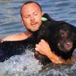 Мужчина спас тонущего медведя: развязка ошеломила ➤ Главное.net