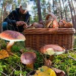 Новый штраф для россиян за сбор грибов ➤ Главное.net
