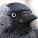 Дождь из мертвых птиц: в Саратовской области зафиксировано редчайшее явление (видео) ➤ Главное.net