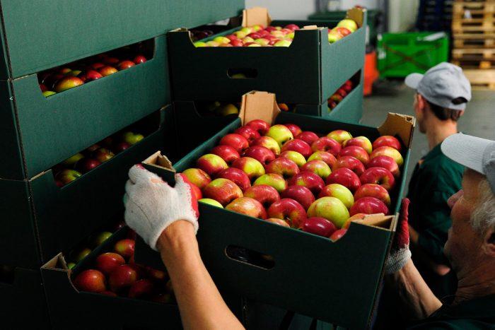 Россия запретила ввоз томатов и яблок из Азербайджана ➤ Главное.net