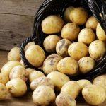 Россиян ждут штрафы за картошку ➤ Главное.net