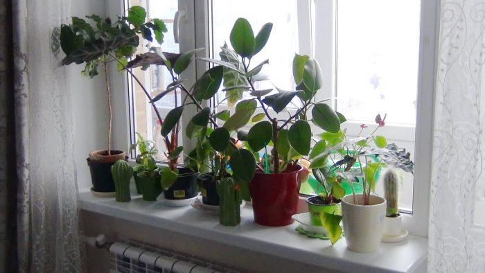 Эксперт назвал комнатные растения, опасные для человека ➤ Главное.net